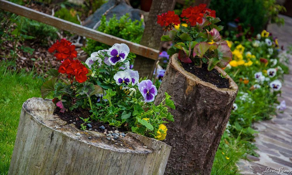 flori cazare in baisoara