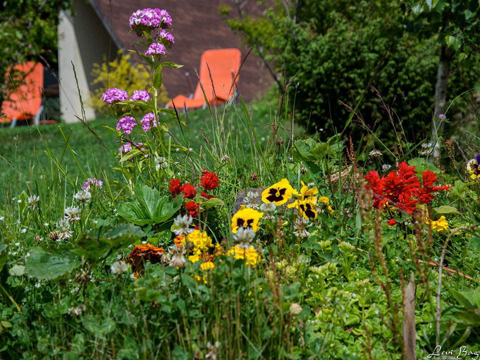 pensiunea andreea baisoara exterior flori